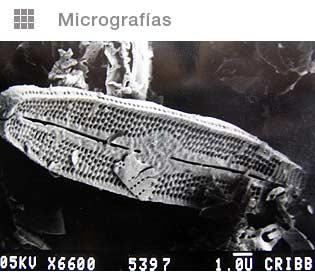 Micrograf-diatomita