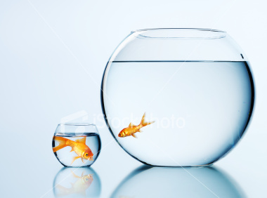 Pez grande-pez chico