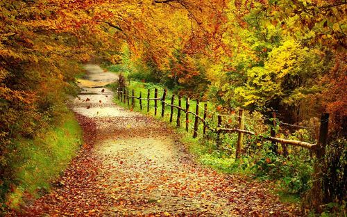 Camino-por-el-bosque-en-la-estacion-de-otoño-autumn-forest-rural-road